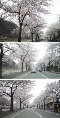 Sakuraline