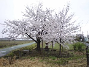 Sakuratohokora